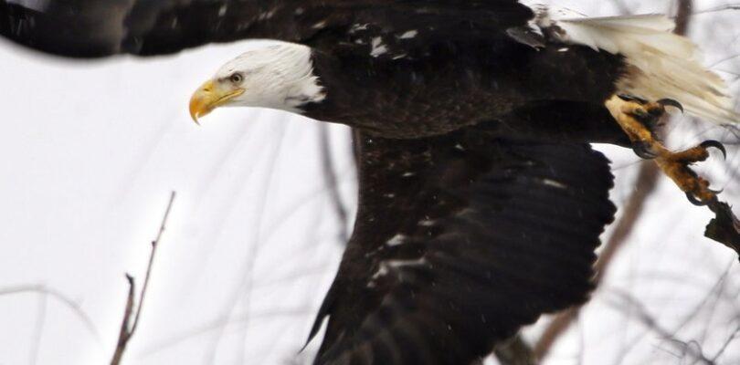 The Political Battle Over Endangered Species